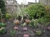 Planting & Mulching